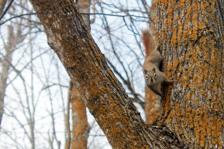inquisitive squirrel / rejoicing hills