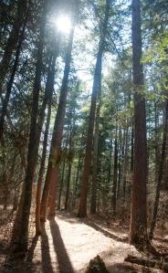 pine forest / rejoicing hills