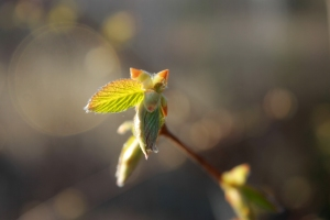 green leaf / rejoicing hills