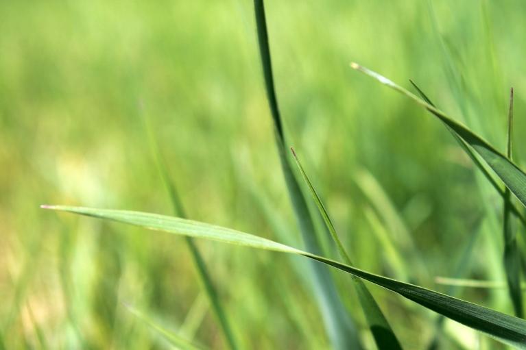 green grass / rejoicing hills