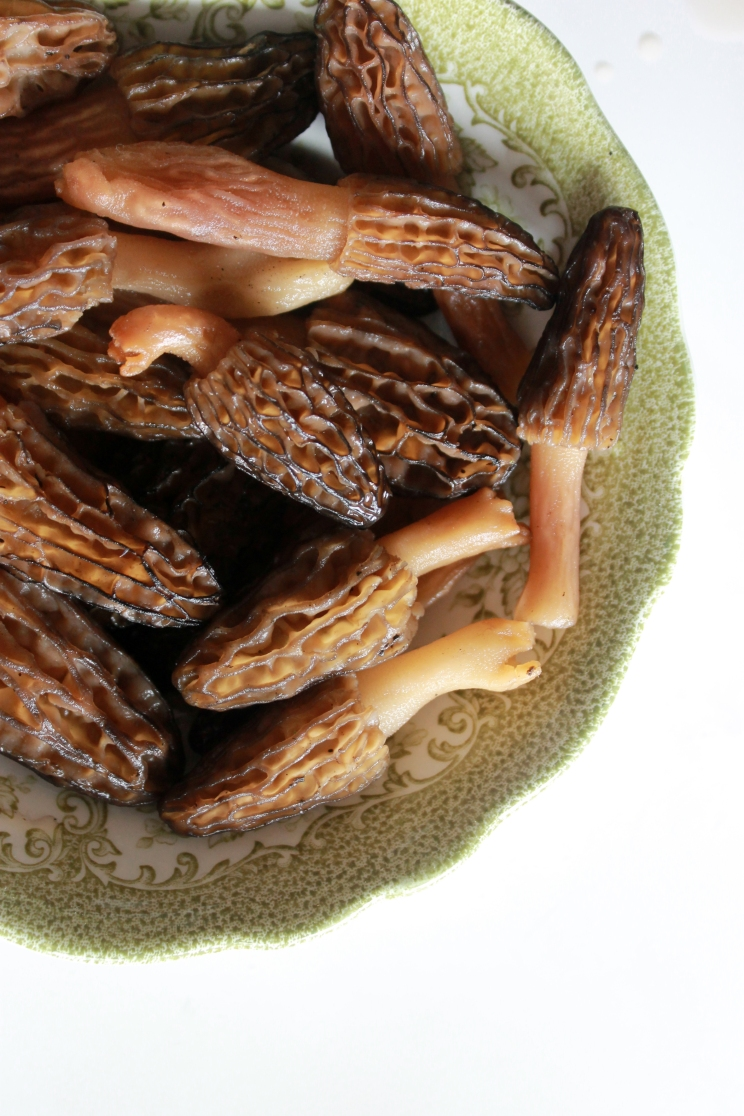 bowl of morels mushrooms / rejoicing hills