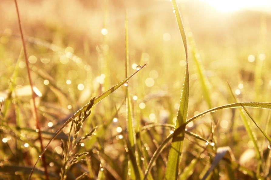 dewy grasses / rejoicing hills