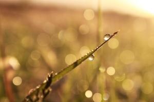 droplets on grass / rejoicing hills