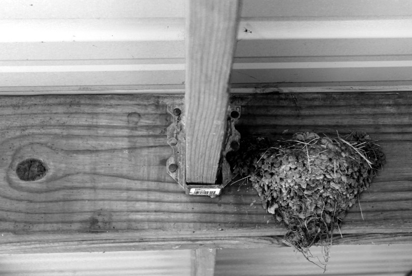 swallow nest / rejoicing hills