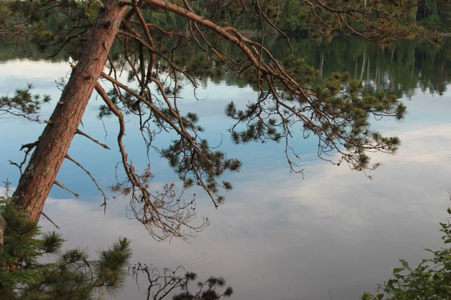 pine over lake / rejoicing hills