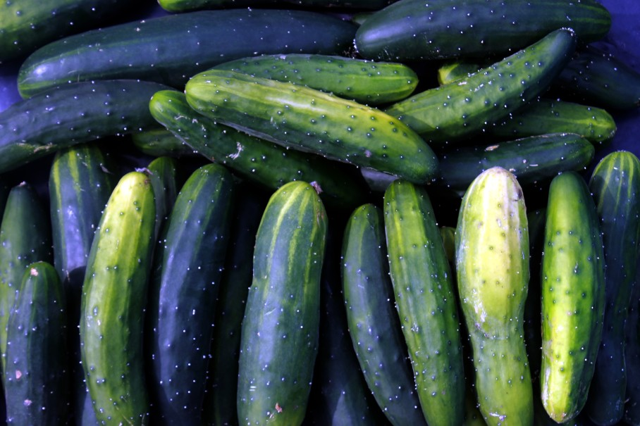 cucumbers / rejoicing hills