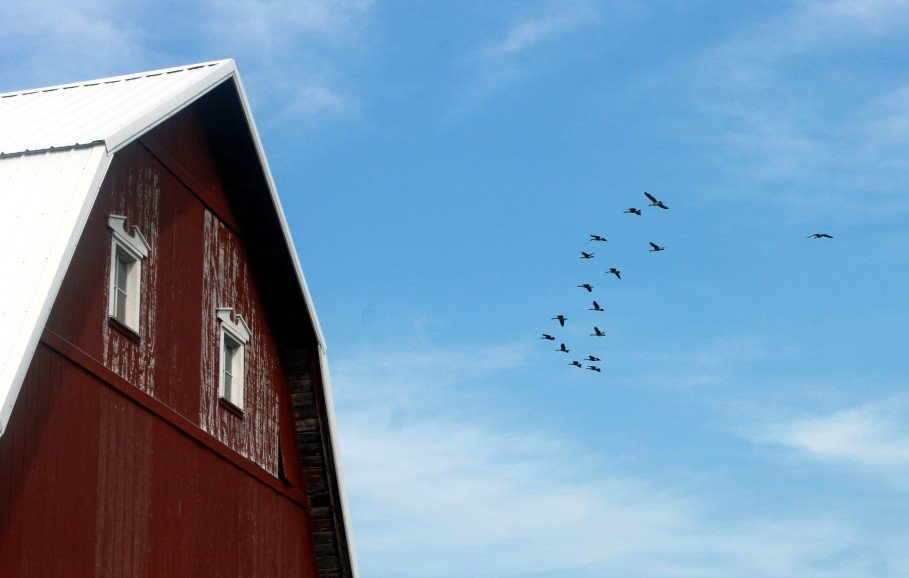 barn and flying geese / rejoicing hills