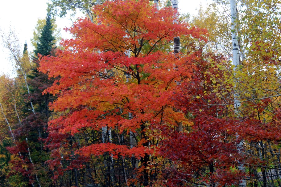 flaming maple / rejoicing hills