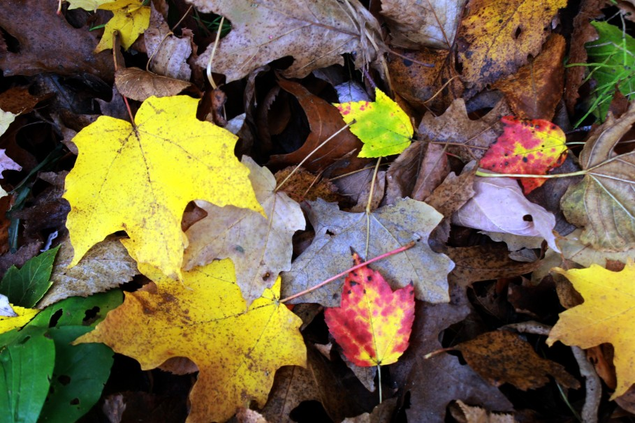 fallen leaves / rejoicing hills