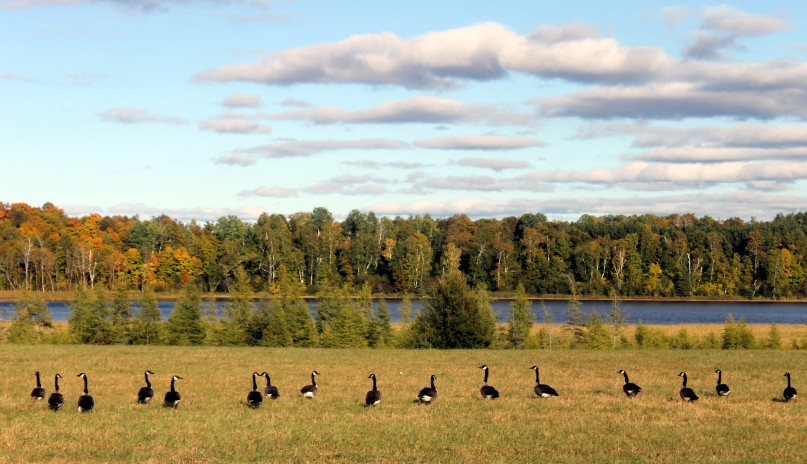geese in a row / rejoicing hills