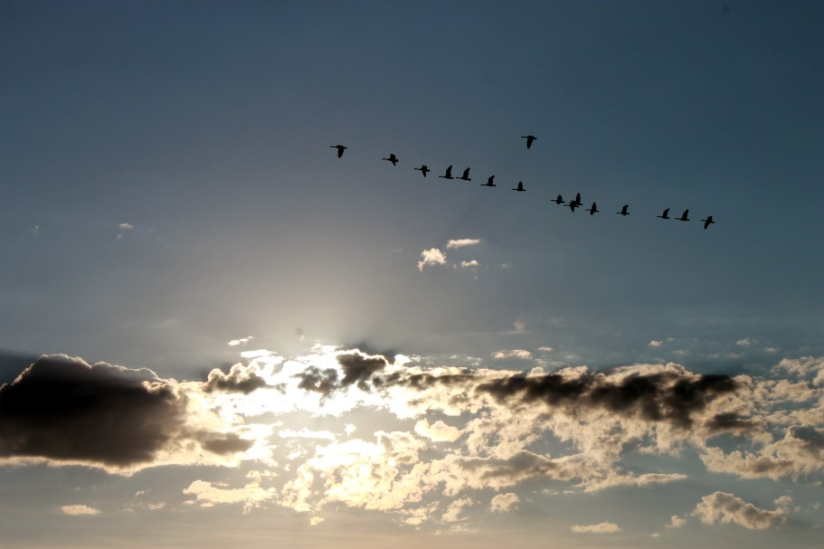flying geese / rejoicing hills