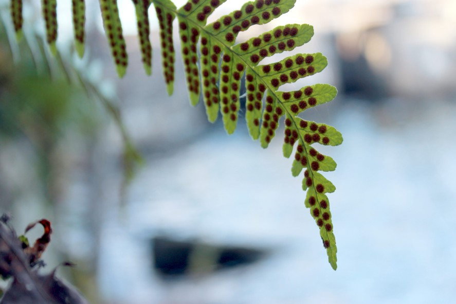 ferns / rejoicing hills