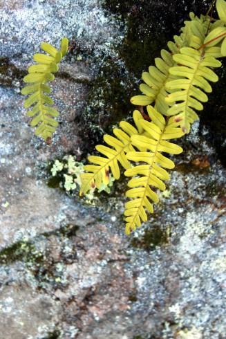 fern on rock face / rejoicing hills